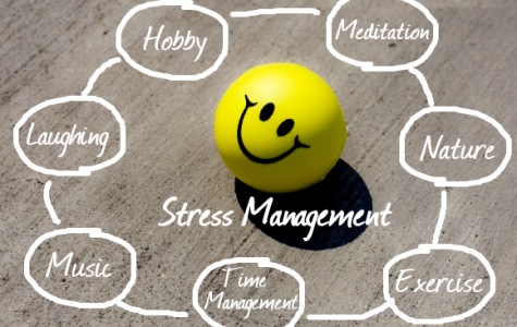 #DolphinsLiveWell: Stress Management 101